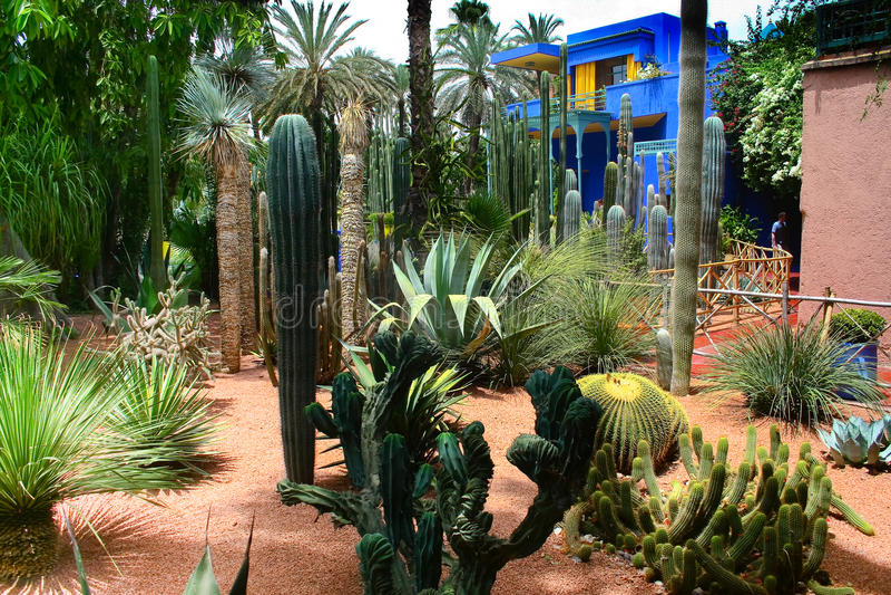 Jardine Majorelle a Marrakesh, Marocco fotografia stock