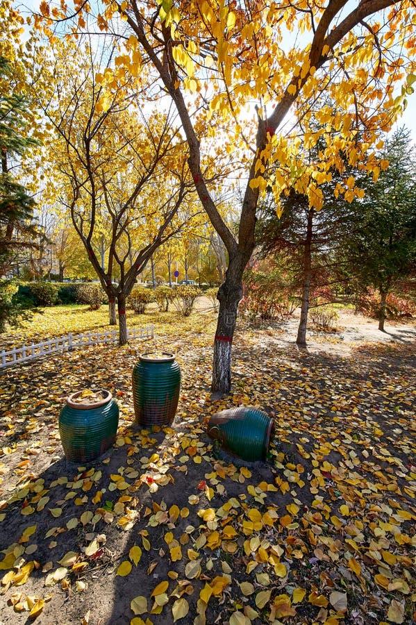 A jardineira e as folhas caídas no parque fotografia de stock royalty free