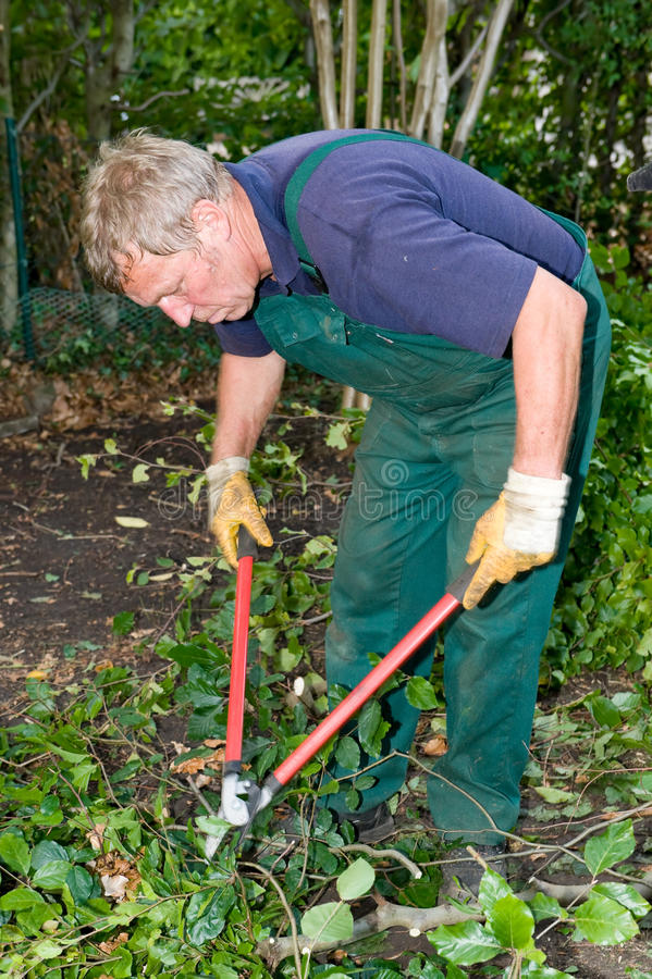 Jardineiro com cortador imagens de stock royalty free