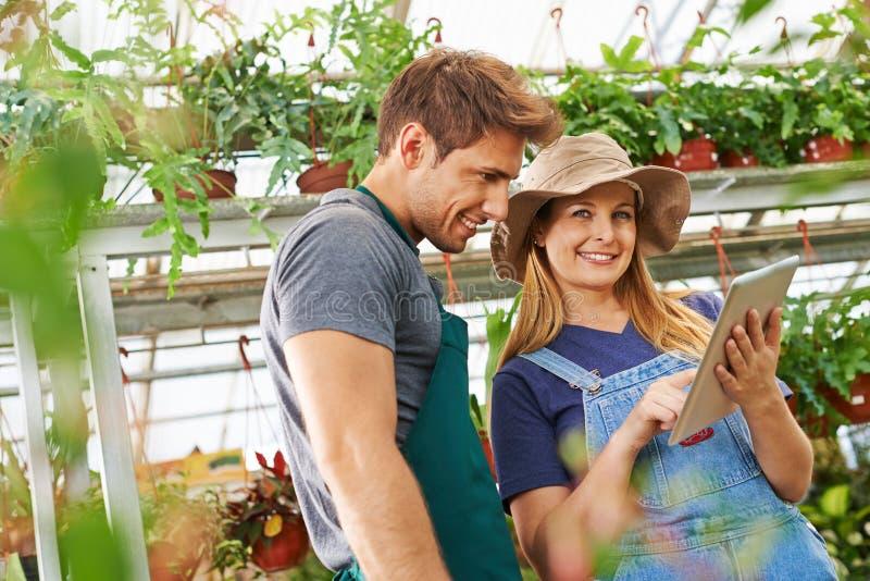 Jardineiro com o tablet pc na estufa fotos de stock royalty free