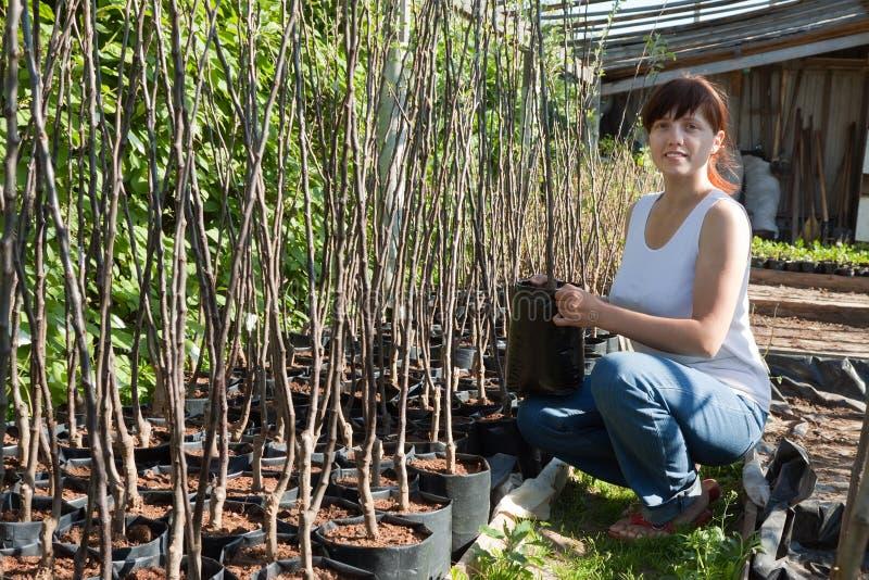 Jardineiro com os seedlings das árvores em uns potenciômetros imagem de stock
