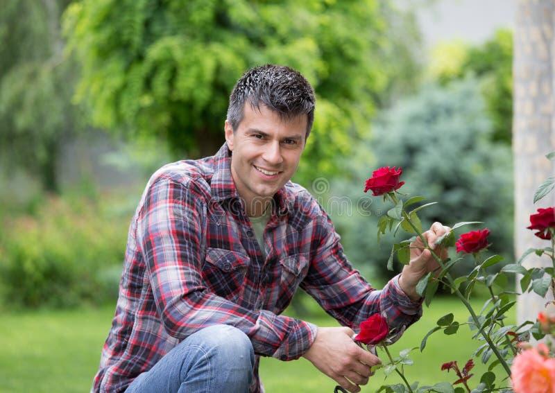 Jardineiro com tesouras e rosa do vermelho foto de stock royalty free
