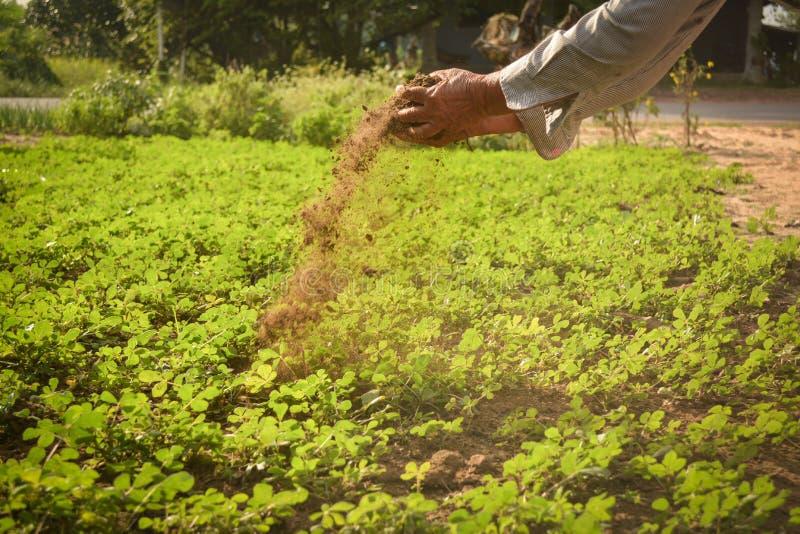 Jardineiro da mão velha que guarda o estrume fotografia de stock royalty free