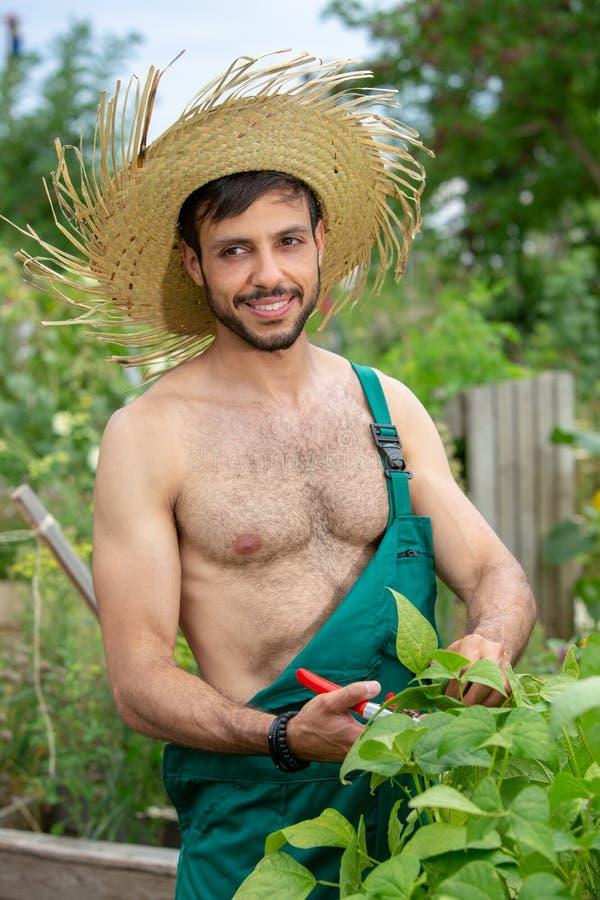 Jardineiro descamisado com as flores de corte do chapéu de palha no jardim imagem de stock royalty free