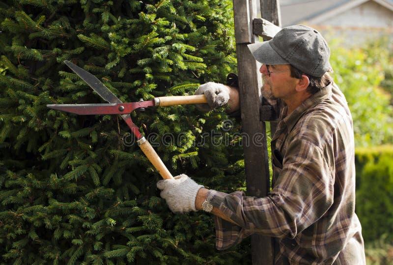 Jardineiro durante o trabalho fotografia de stock