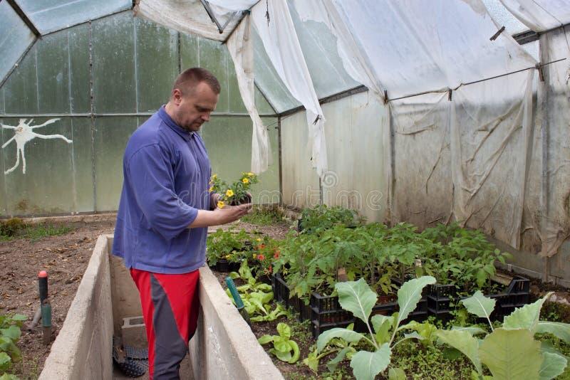 Jardineiro em uma estufa fotografia de stock royalty free