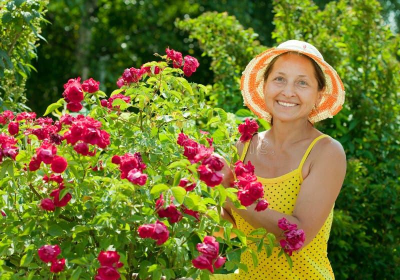 Jardineiro feliz na planta das rosas fotos de stock royalty free
