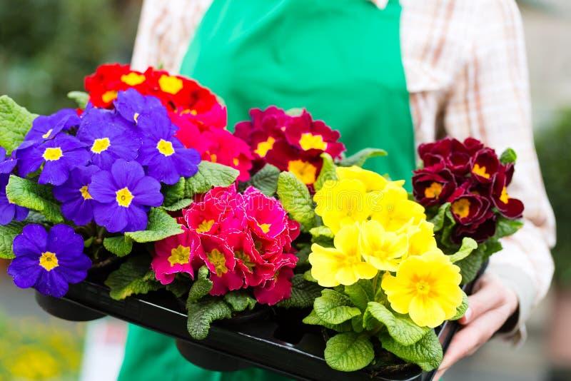 Jardineiro no jardim ou no berçário do mercado fotografia de stock