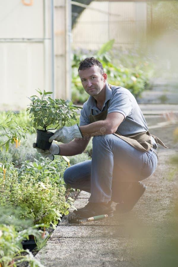 Jardineiro no trabalho fotografia de stock royalty free