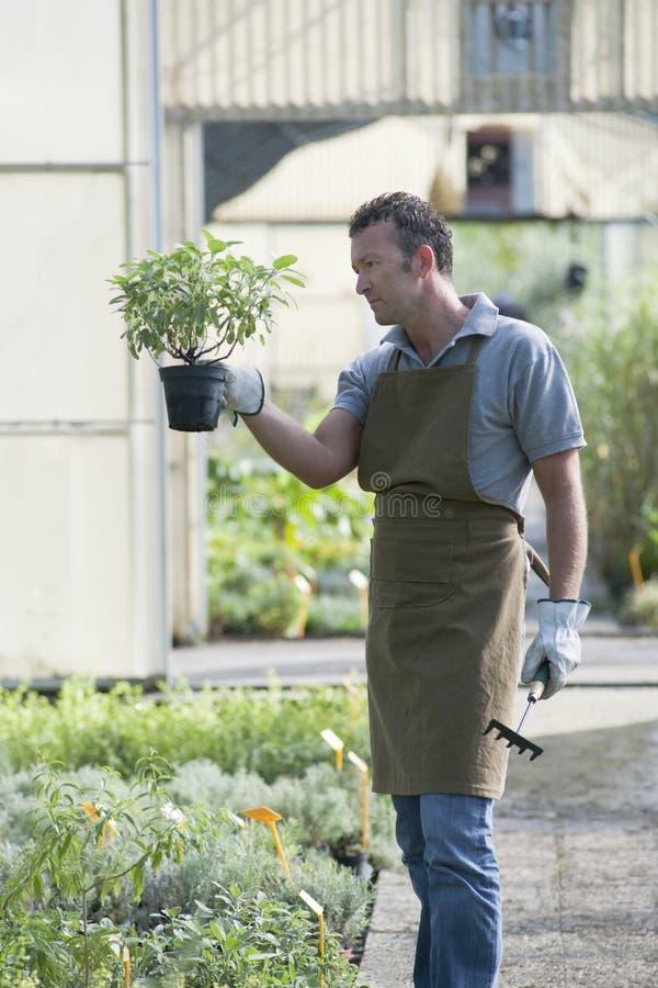 Jardineiro no trabalho fotografia de stock
