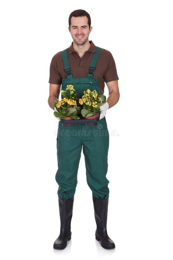 Jardineiro novo feliz que guardara flores fotos de stock
