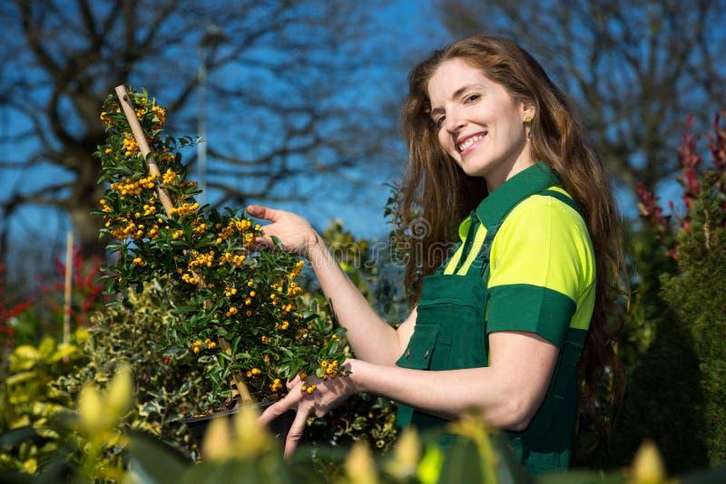 Jardineiro ou fazendeiro fêmea com o arbusto das bagas foto de stock