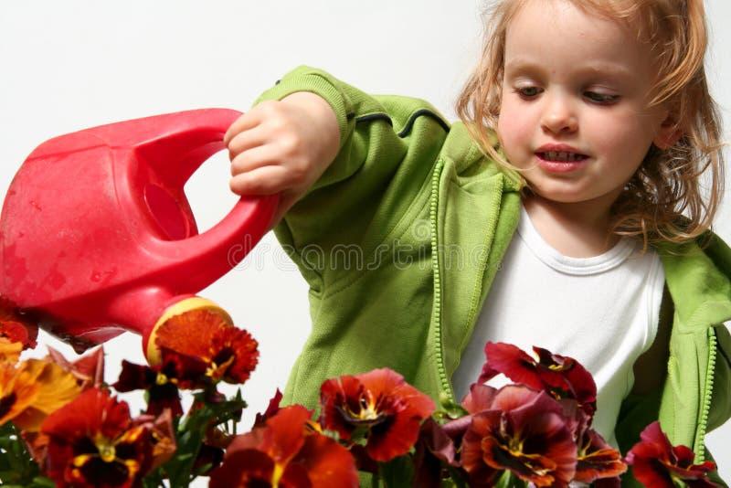 Jardineiro pequeno fotos de stock