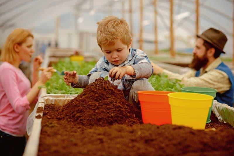 Jardineiro pequeno trabalho pequeno do jardineiro com solo pouco jardineiro na estufa crian?a pequena do jardineiro que planta fl fotos de stock