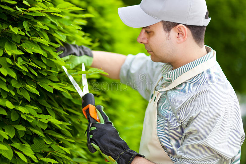 Jardineiro profissional que poda uma conversão foto de stock