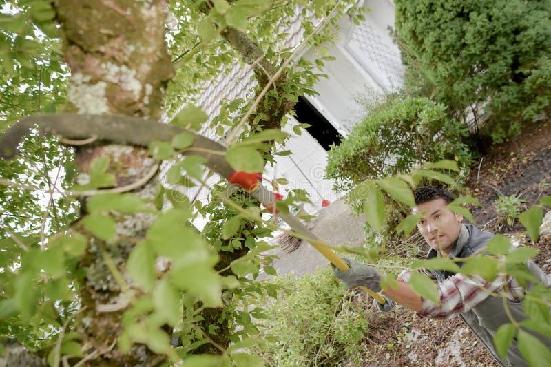 Jardineiro que apara as conversão foto de stock royalty free