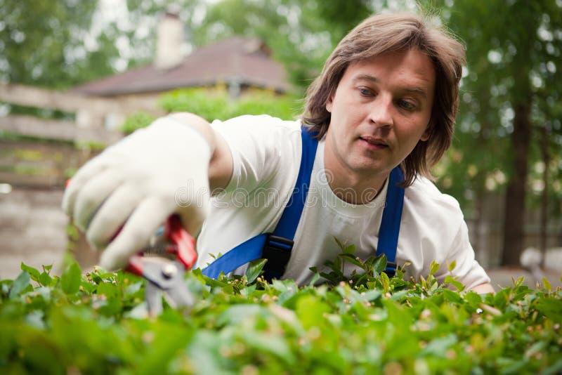 Jardineiro que corta um arbusto fotografia de stock