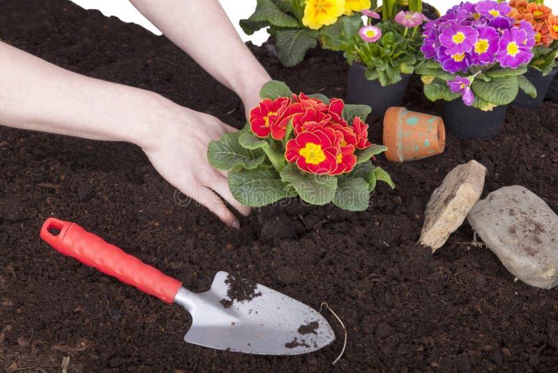 Jardineiro que planta flores fotos de stock royalty free