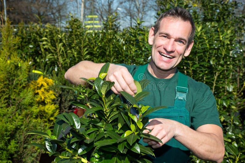 Jardineiro que poda uma árvore ou uma planta no berçário fotografia de stock royalty free