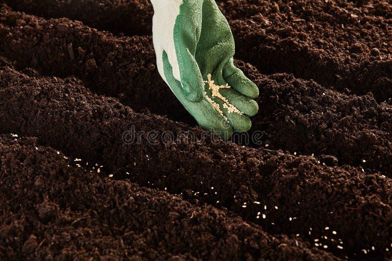 Jardineiro que semeia sementes no início da mola fotografia de stock royalty free