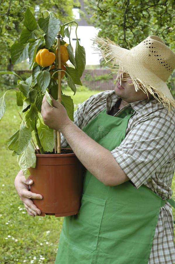 Jardineiro: verificação imagem de stock