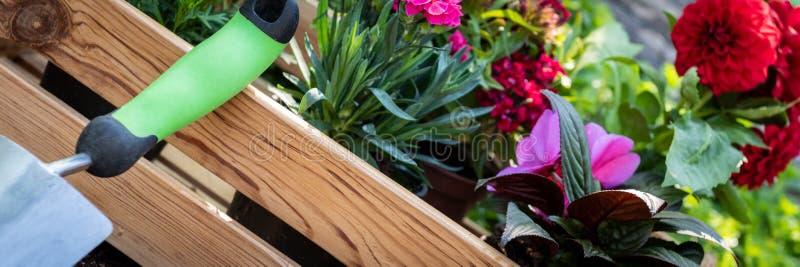 Jardinería Cajón por completo de plantas magníficas listas para plantar en jardín El jardín de la primavera trabaja concepto Jard fotos de archivo libres de regalías