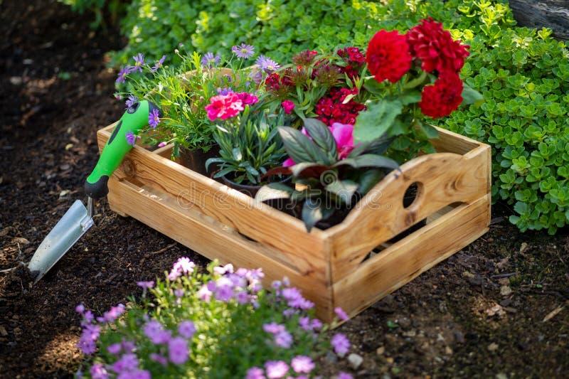 Jardinería Cajón por completo de plantas magníficas listas para plantar en jardín El jardín de la primavera trabaja concepto Jard imagenes de archivo