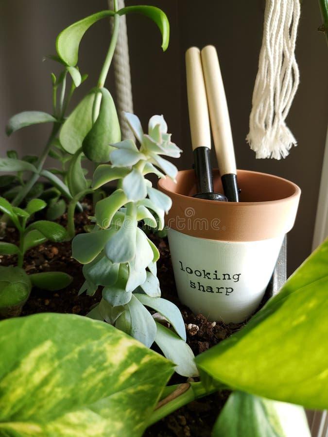 Jardinería interior DIY Home imagenes de archivo