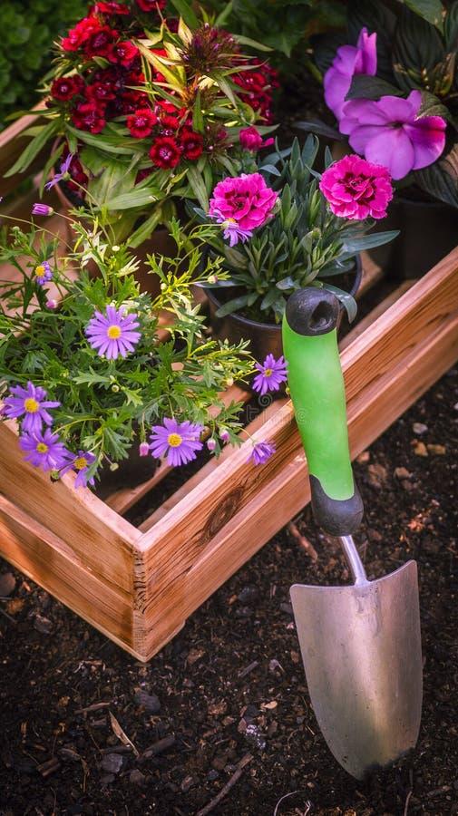 Jardinería Utensilios de jardinería y cajón por completo de plantas magníficas listas para plantar en Sunny Garden El jardín de l foto de archivo libre de regalías