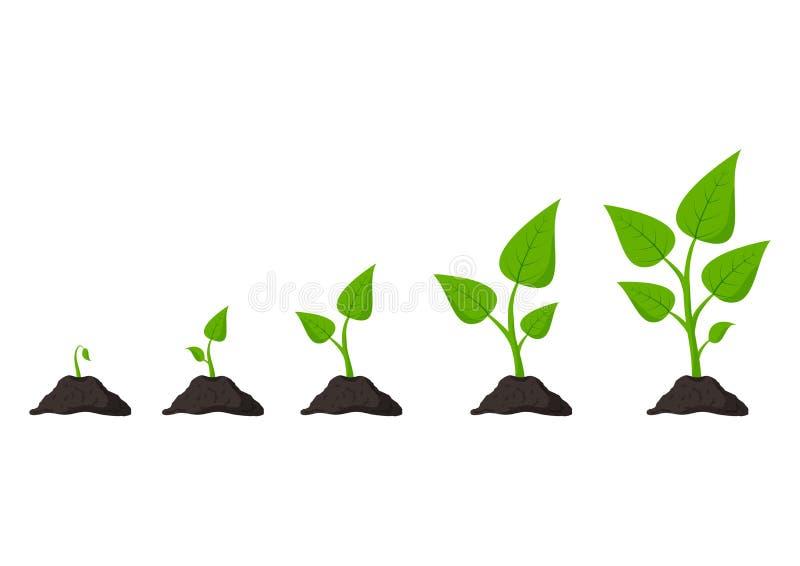 Jardiner?a Las fases plantan el crecimiento planting Brote de las semillas en tierra Ilustraci?n del vector stock de ilustración