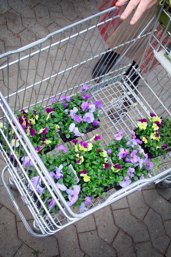 Jardinerie photo stock