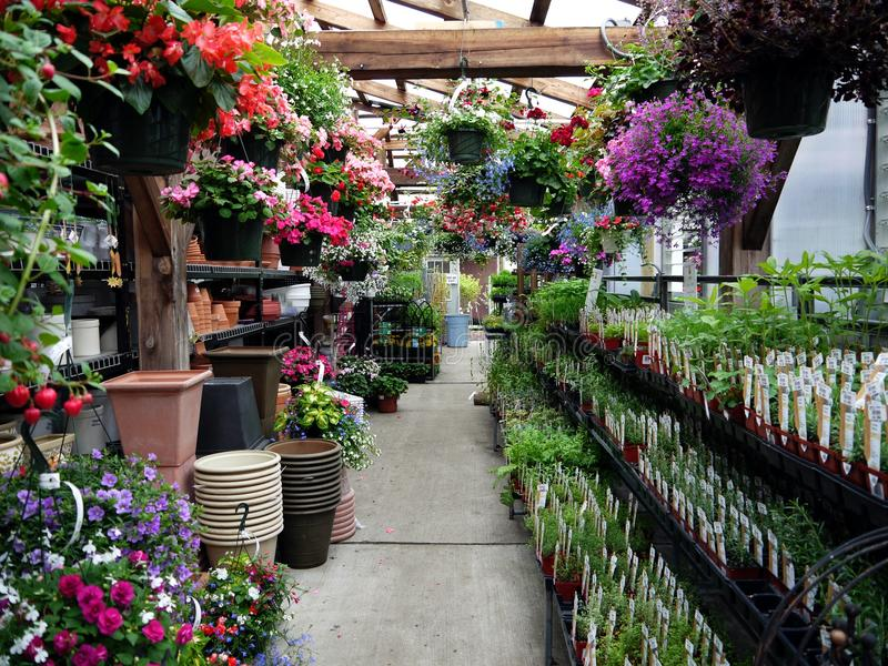 Jardinerie : herbes et paniers s'arrêtants images stock