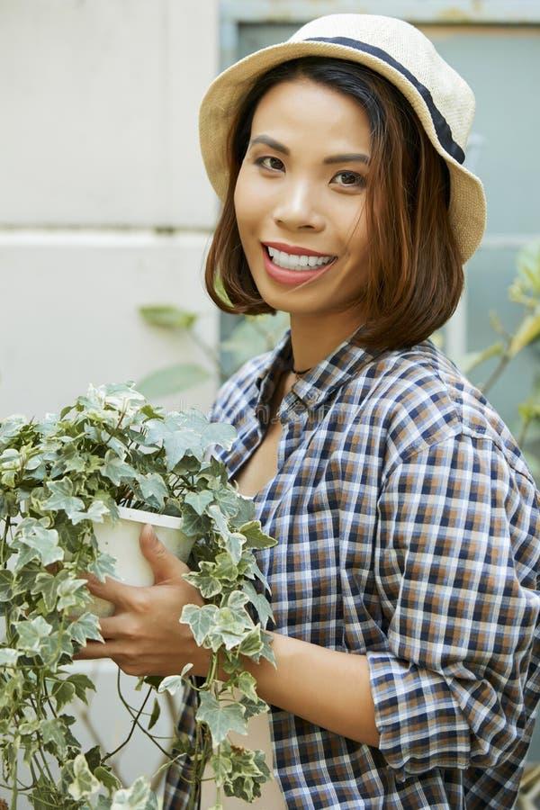Jardinero con la planta del cissus fotos de archivo
