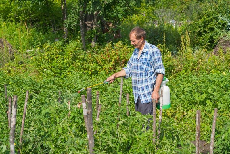 Jardinero con la regadera 6 fotos de archivo