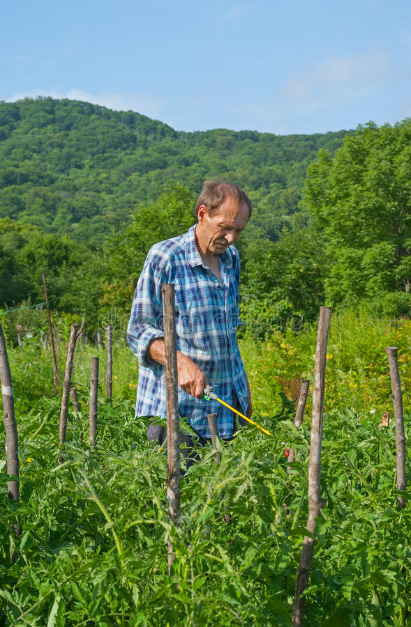 Jardinero con la regadera 2 fotografía de archivo