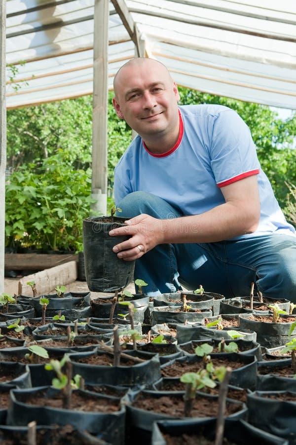 Jardinero con las plantas de semillero imagen de archivo libre de regalías