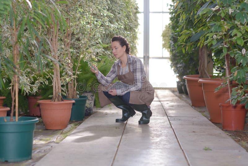 Jardinero de la mujer que trabaja en tienda del jardín imágenes de archivo libres de regalías