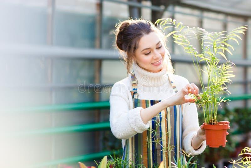 Jardinero de sexo femenino alegre que toma cuidado de la pequeña palma en pote fotografía de archivo libre de regalías