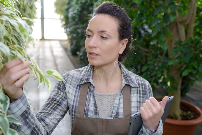 Jardinero de sexo femenino en el trabajo en invernadero foto de archivo libre de regalías