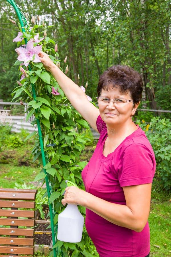 Jardinero de sexo femenino mayor sonriente que toma el cuidado de plantas en jardín del verano, rociando una planta con agua pura fotografía de archivo