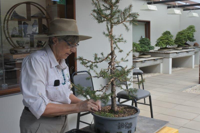 Jardinero de sexo femenino que arregla el árbol de los bonsais foto de archivo libre de regalías