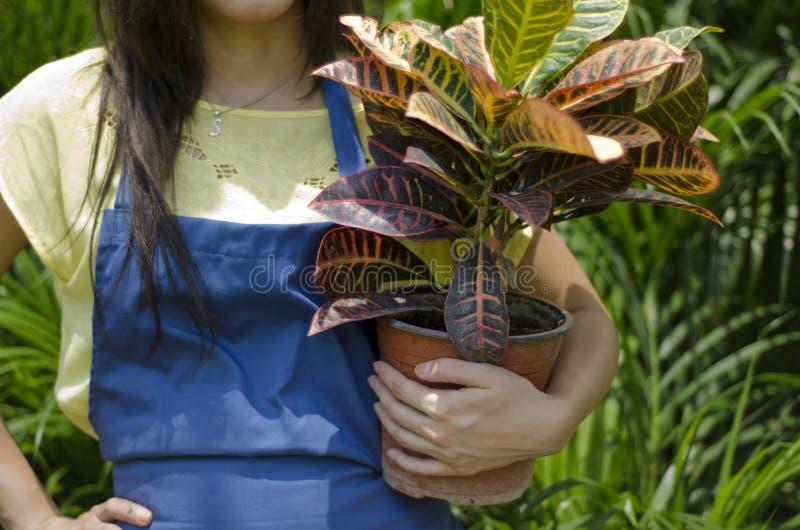 Jardinero de sexo femenino que lleva una planta fotos de archivo libres de regalías