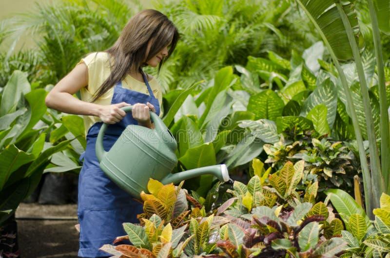 Jardinero de sexo femenino que riega las plantas fotografía de archivo libre de regalías