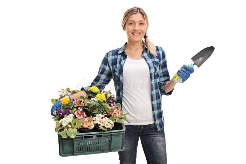 Jardinero de sexo femenino que sostiene un estante de flores fotos de archivo