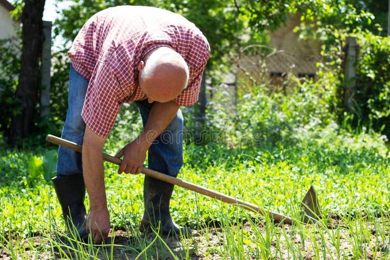 Jardinero de sexo masculino mayor fotos de archivo