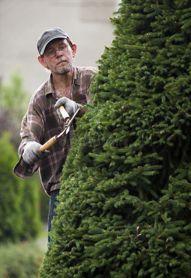 Jardinero durante trabajo fotografía de archivo