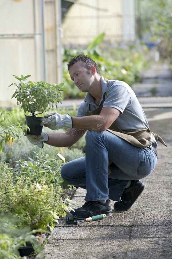 Jardinero en el trabajo imagen de archivo