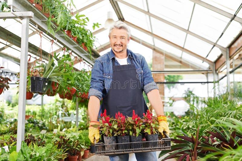 Jardinero en flores que llevan de la tienda del cuarto de niños foto de archivo
