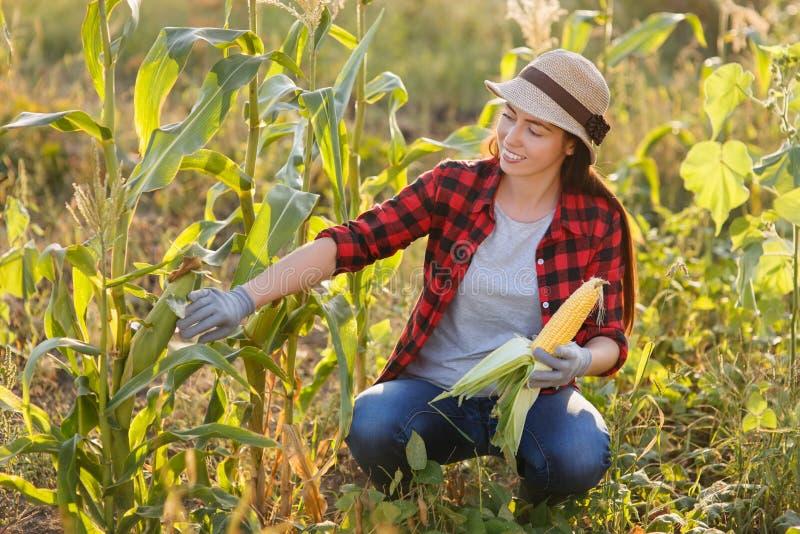 Jardinero feliz de la mujer con la mazorca de maíz fotos de archivo libres de regalías