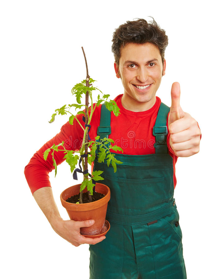 Jardinero feliz que detiene los pulgares fotografía de archivo